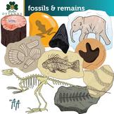 Fossils Clip Art II