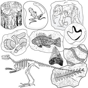 Fossils Clip Art II by Studio Devanna
