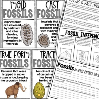 Fossils Resource Guide: Foldables & Activities for Interactive Notebooks