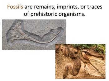 Fossils SMART notebook presentation