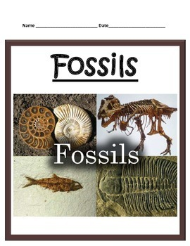 Fossils STUDY GUIDE - 3rd Grade science