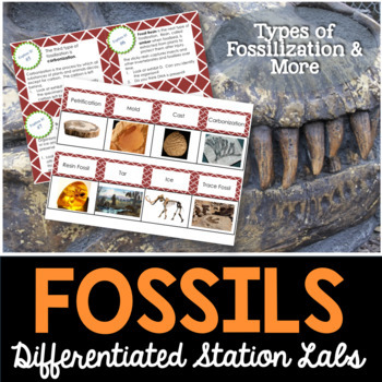 Fossils Student-Led Station Lab