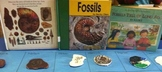 Fossils Tell Us About Long Ago!