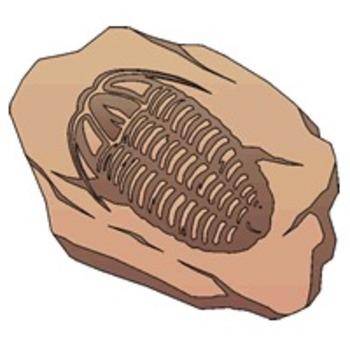 Fossils Test