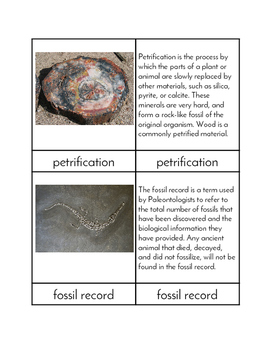 Fossils - Three/Four Part Cards
