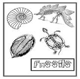 Fossils Unit Study