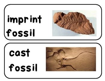 Fossils Vocabulary Word Wall Words & Activities