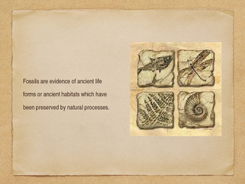 Fossils:  What are they and how are they formed?