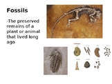 Fossils Word Wall/ Flash Cards