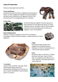 Fossils and Fossil Formation