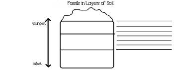 Fossils in Soil