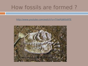 Fossils pwpt