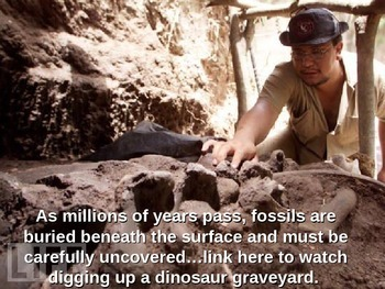Fossils: Digging Up the Past (animated and contains video links)