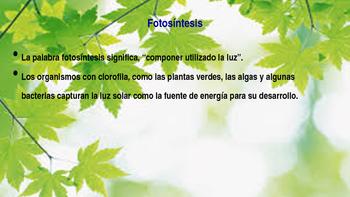 Fotosentisis-Photosynthesis