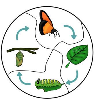 Butterfly Life Cycle Centers Bundle Kindergarten