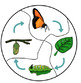 Butterfly Life Cycle Centers for Kindergarten