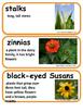 ReadyGen Four Seasons Make a Year Vocabulary, Kindergarten, Unit 2, Module A