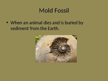 Four Types of Fossils Powerpoint