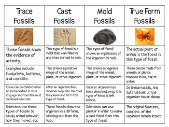 different types of fossil dating Types of fossils unaltered remains - e social group - if fossils of different-sized animals of the same type were found together dating of fossils.