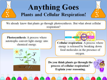 Four wks of Photosynthesis and Cell Respiration Bellringers Warm Ups and Answers