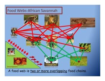 Fourth Grade Food Webs