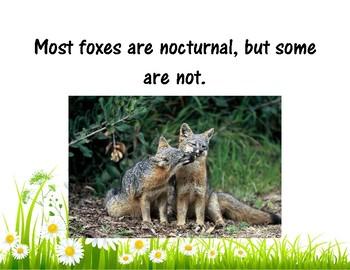 Fox Facts + Fox Project