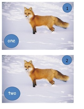 Fox socks GOOD DOCTOR in snow words and numbers ESL one to one correspondence