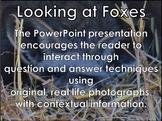 African Animals: Foxes - PowerPoint presentation