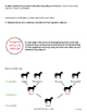 Fractions & Percent in the Real World of Horses
