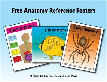 Free Anatomy Reference Posters