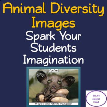 Free, Animal Diversity PowerPoint