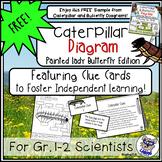 Free Caterpillar Diagram for Gr. 1-2