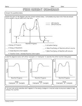 Free Energy Diagrams Biology Homework Worksheet
