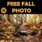 Free Fall Leave Stock Photo #236