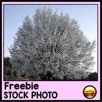 Free Flowering Spring Tree STOCK PHOTO