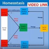 Homeostasis Video LINK