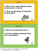 Free Mammals Science Task Cards