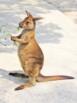 Australia: Australian Animals