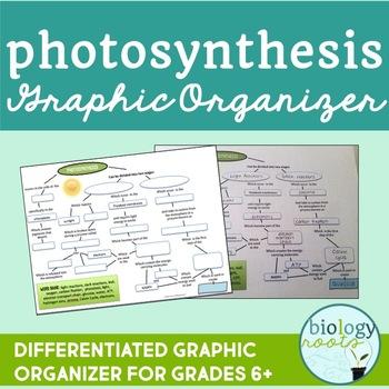 Free Photosynthesis Graphic Organizer