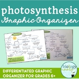 Free Photosynthesis Graphic Organizer