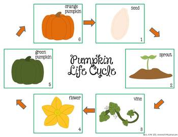 graphic about Life Cycle of a Pumpkin Printable referred to as Free of charge Pumpkin Daily life Cycle