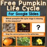 Free Pumpkin Life Cycle Interactive Google Slides for Goog