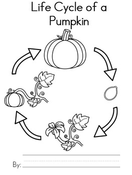 Impeccable image inside life cycle of a pumpkin printable