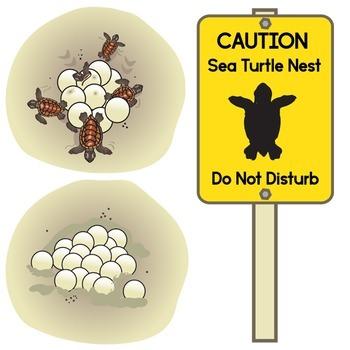 Free Sea Turtle Conservation Clip Art Set - Hawksbills and Loggerheads