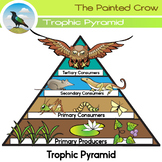 Free Science Clip Art - Trophic Pyramid - Food Chain - Color & Blackline