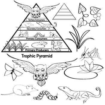 Free Science Clip Art - Trophic Pyramid - Food Chain - Color & Blackline