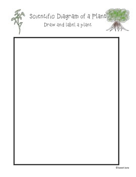 Free Scientific Drawing of a Plant Lesson