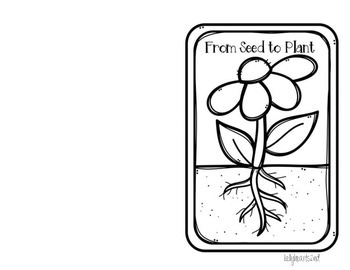 """Free"" Seed to Plant Booklet"