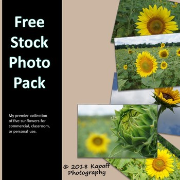 Free Stock Photos: Sunflowers