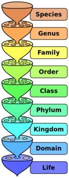 Free Taxonomy Diagram